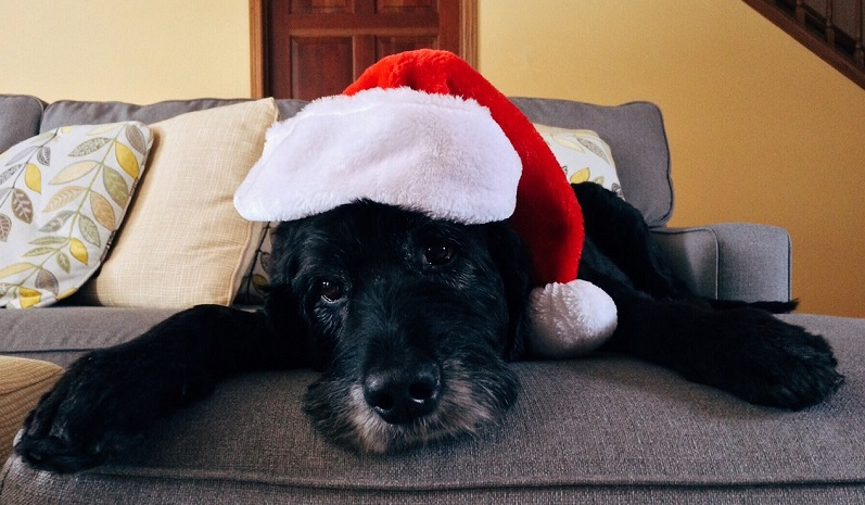 keep your pets safe for the holidays
